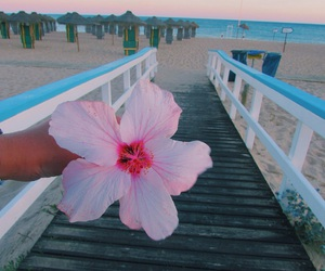 algarve, flower, and beach image