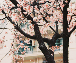 2012, analog, and cherryblossom image