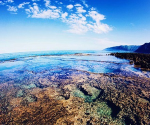 coral, ocean, and salt water image