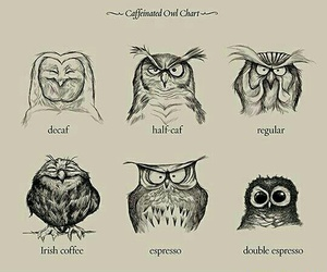 owl, coffee, and funny image