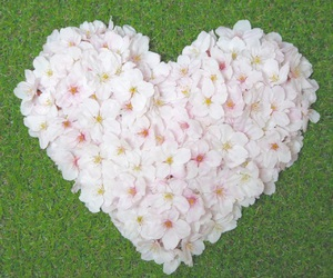 beauty, cherry blossom, and heart image