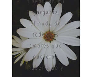 blanco, book, and flor image