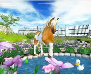horses, pony, and sso image