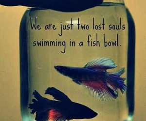 Pink Floyd, bowl, and fish image