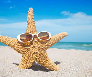 beach, summer, and starfish image