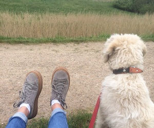 blonde, creepers, and dog image