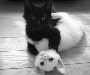 awesome, kitten, and aww image