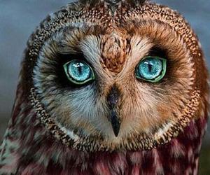 owl, blue, and eyes image