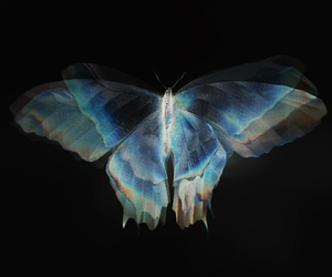 butterfly, blue, and beautiful image