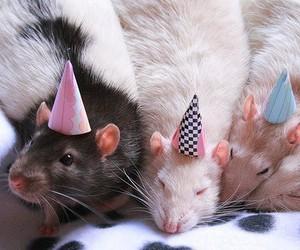 rat, cute, and birthday image
