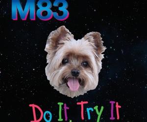 dog, Dream, and m83 image