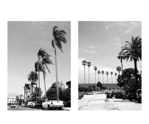summer, palm trees, and black and white image