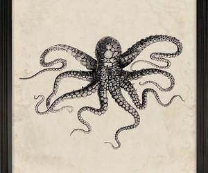 marine, octopus, and retro image