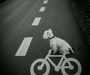 dog, bike, and street image