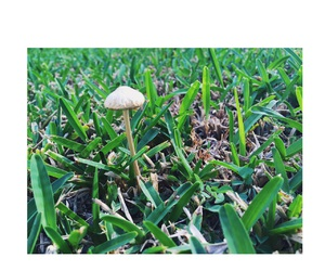 green, mushrooms, and nature image