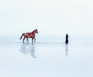 animals, art, and Dubai image