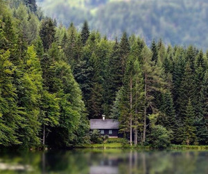forest, house, and trees image