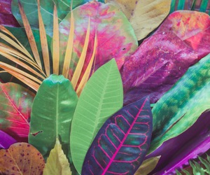 colorful, plants, and colors image