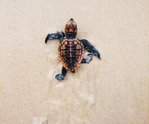 beach, turtle, and animal image