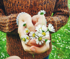 daisy, flowers, and hands image