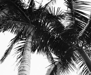 summer, black and white, and palm trees image