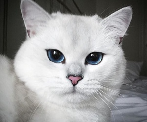 cat, eyeliner, and makeup image