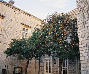 vintage, orange, and tree image