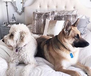 animals, big, and dog image