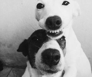 dog, smile, and love image