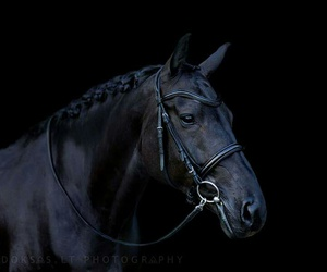 black, dark, and horse image