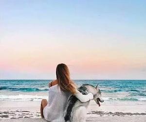 animal, beach, and paradise image