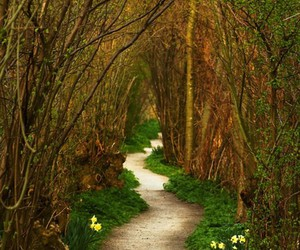 path, nature, and tree image