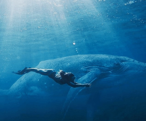 mermaid and whale image