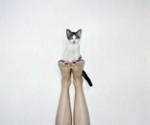cat, girl, and handstand image