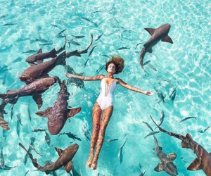 girl, summer, and shark image