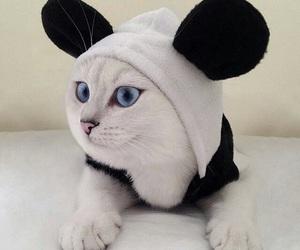 cat, animal, and panda image