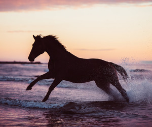 horse and water image