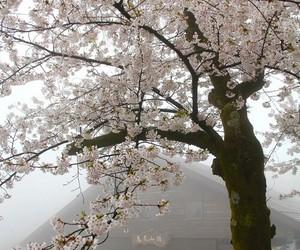 tree, sakura, and japan image