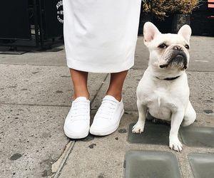 dog, animals, and fashion image