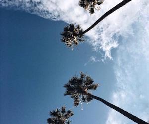 california, palm tree, and sky image