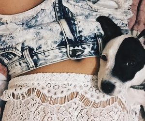 crochet, dog, and ophelia image