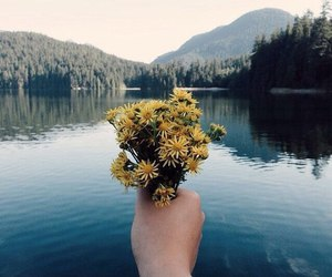 flowers, nature, and hand image
