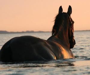 horse and sea image