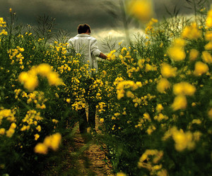 flowers, yellow, and boy image