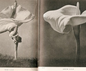 flowers, dance, and ballet image