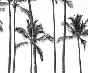 pretty and palm trees image