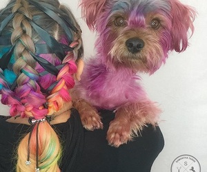 colorful, dog, and hair image