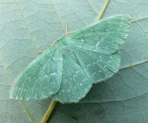 butterfly, green, and moth image