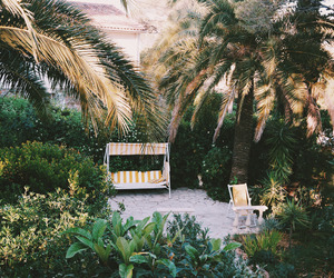 palm trees, tropical, and paradise image