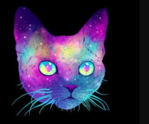cat, hippie, and trippy image